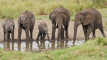 Olifanten drinken uit poel in Afrika van Robin Jongerden