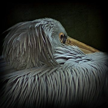 pelican van bob van den berg