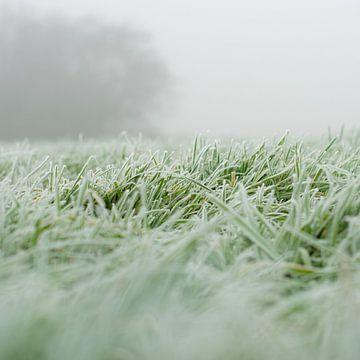 Gras in de mist van Art_Pics_Lotte | Lotte Photo&Design