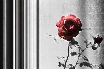 Rosenduett von Dagmar Marina