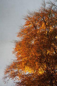 Feuriger Herbstbaum von Daan Ruijter