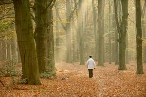 Herfstbos met wandelende vrouw