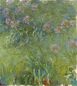 Agapanthus, Claude Monet von Meesterlijcke Meesters