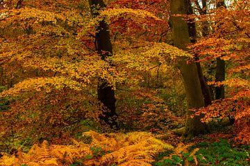 Herfstkleuren in de bomen van Brian Morgan