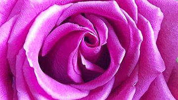 Rose van Gerhilde Mulder