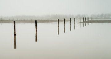 Maas uiterwaarden in de mist van