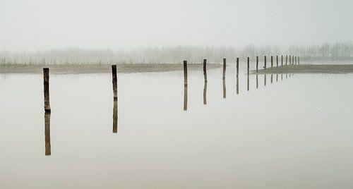 Maas uiterwaarden in de mist