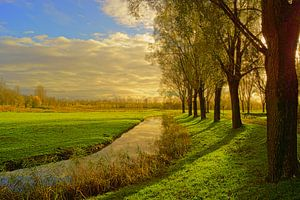 Biesbosch