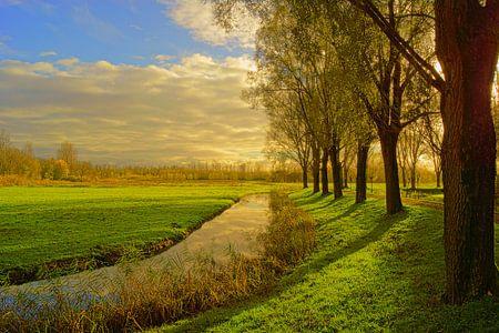 Biesbosch von Michel van Kooten