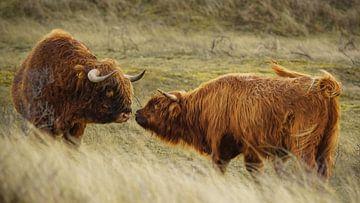 Faune et flore sauvages des Highlands écossais sur Dirk van Egmond