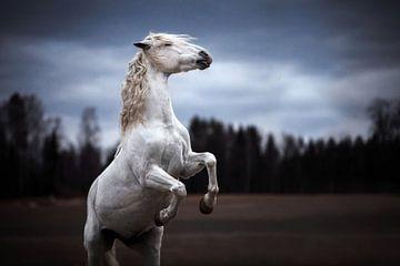 Steigerend Spaans paard / Noorwegen / Paard / Dierenfotografie /Ruig  beeld / van Jikke Patist