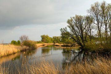 Bomen weerspiegeld in het water van Ruud Morijn
