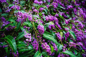 Paarse bloemen en regendruppels van Deborah Zannini