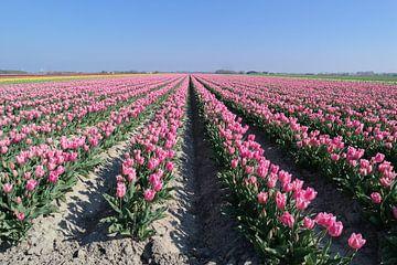 tulpen veld van Angelique Rademakers
