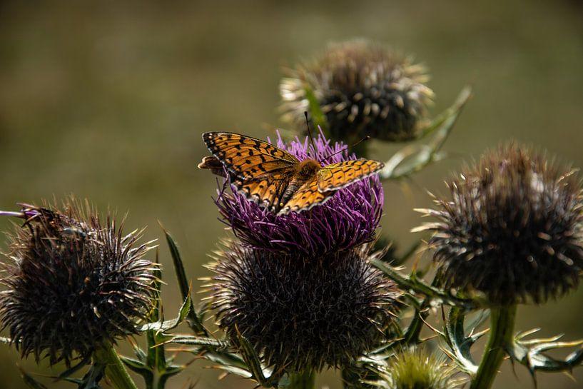 Vlinders op de Monte Baldo van Patrick Boonstra