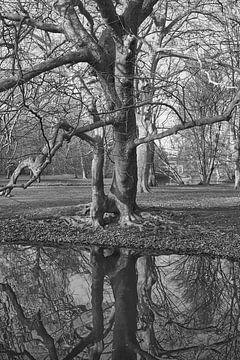 Euromast Park Rotterdam von EdsCaptures fotografie