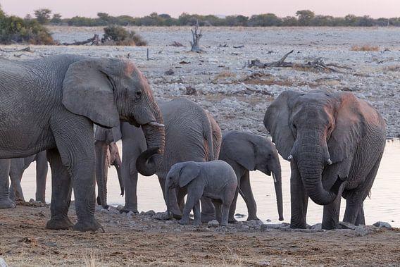 Olifanten Etosha National Park - Okaukuejo Water Hole van Eddy Kuipers