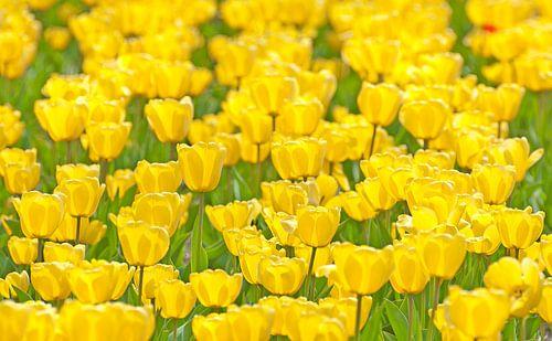Yellowfield van