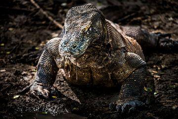 Komodo dragon, Komodo varaan van Corrine Ponsen