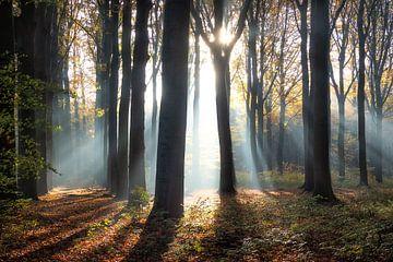 Zonnestralen in de herfst van Bart Ceuppens