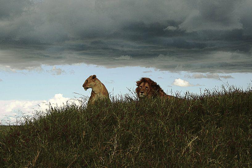 Serengeti Watchers van BL Photography