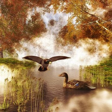 Tierreich  – Zwei Enten in einem Teich von Jan Keteleer