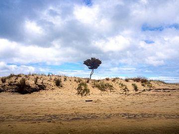 Een eenzame boom op het strand van Abel Tasman National Park in Nieuw-Zeeland van Rik Pijnenburg
