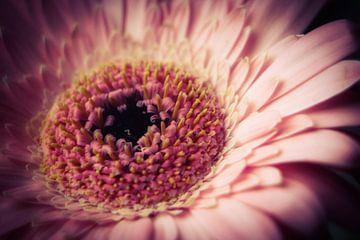 Roze bloem von Chantal Nieuwenhuizen
