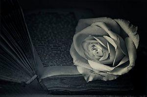 Romantische roos
