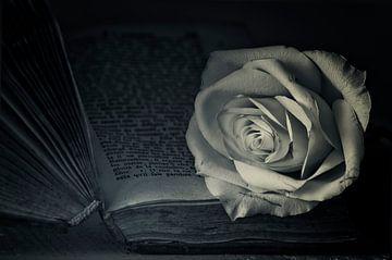 Romantische roos van Ellen Driesse