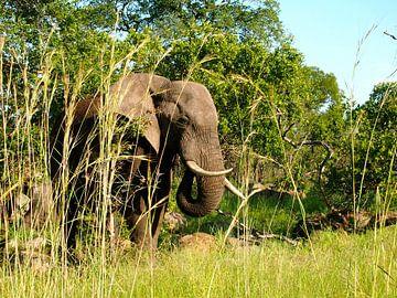 Elefant in Südafrika van Patrick Hundt