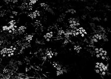 Bloemen van Iritxu Photography