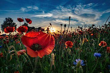 Sonnenuntergang im Mohnblumenfeld von Raoul Juchem