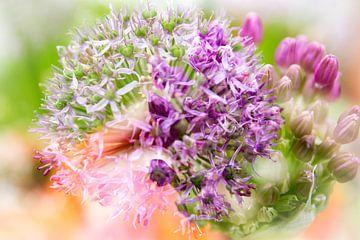 Paarse Allium bloem en knop. Double exposure van Mariette Alders