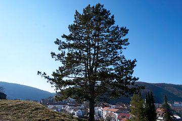 Mooie en imposante boom op een berg met blauwe hemel van creativcontent