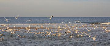 Noordzee sur Peet de Rouw
