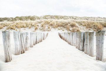 Houten palen tegen met helmgras begroeide duinen. van Ron van der Stappen