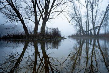 Des arbres dans le ruisseau