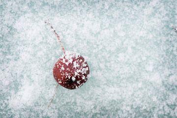 bevroren appeltje van mandy vd Weerd