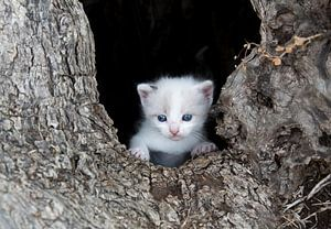 Kitten poes in boomholte