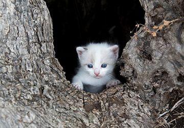 Kitten poes in boomholte van Marcel van Balken