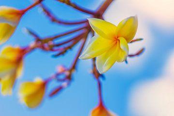 Gelbe Blumen hellblauen Himmel von Nathan Okkerse