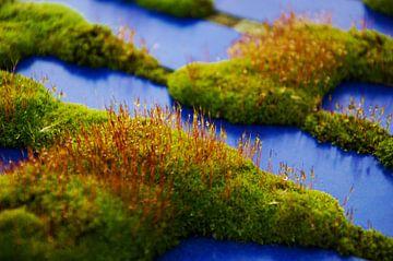 Ochtenddouw op mos von Goldmund Photography