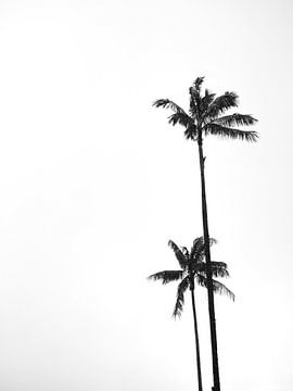Palmbomen zwart wit
