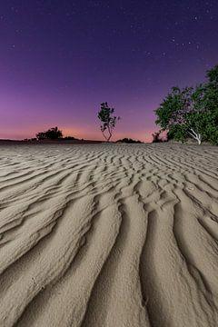 Die Nacht – Nationalpark De Loonse en Drunense Duinen sur Laura Vink