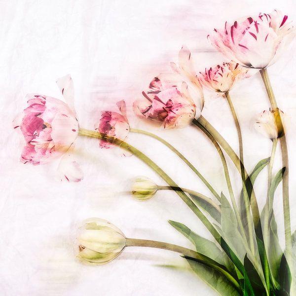 tulpen van MadebyGreet