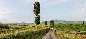 Gladiator's road van Bart Ceuppens
