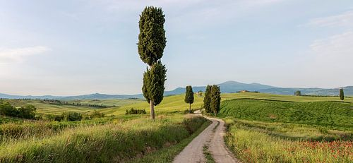 Gladiator's road sur