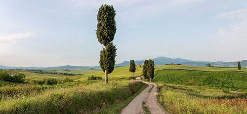 Gladiator's road van