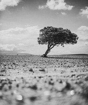 Eenzame Boom (Zwart Wit) van Fabian Bosman